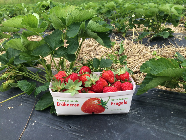 Erdbeer-Schale
